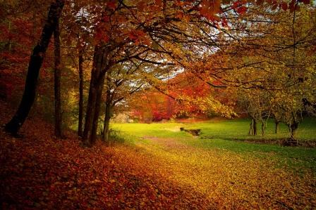 autumn online searches